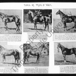 Sons of Man O'War